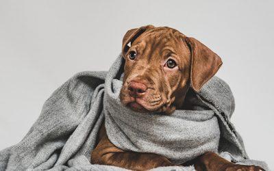 7 consejos para proteger a tu perro del frío