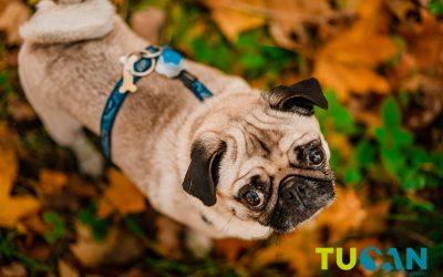 Alergias, parásitos y cambios en el comportamiento: Así afecta el otoño a las mascotas