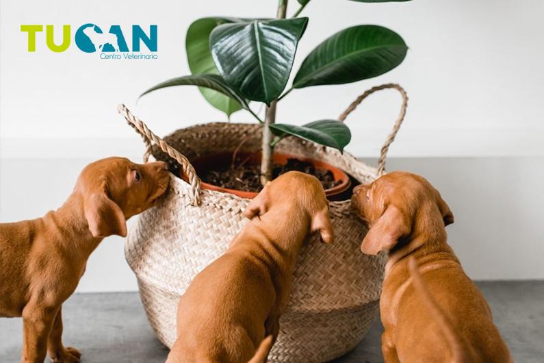 Plantas tóxicas para perros y gatos: conoce sus peligros